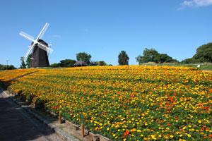 鶴見緑地の風車