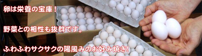 卵は栄養の宝庫