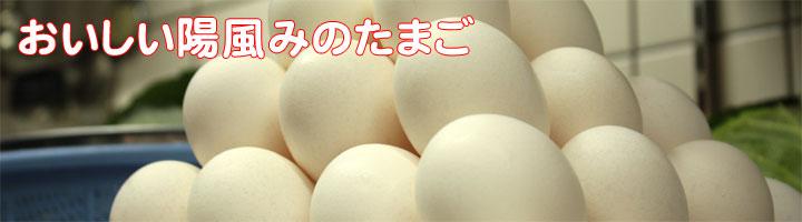 陽風みのおいしい卵(たまご)