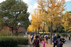 大阪城公園の銀杏の木