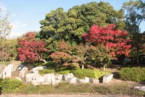 大阪市鶴見緑地の紅葉