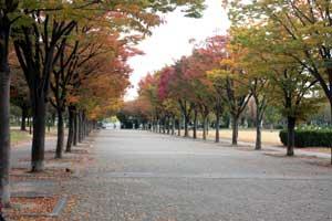 鶴見緑地の並木道